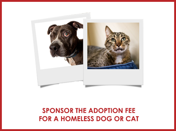 2019-aawl-holiday-sponsor-adoption-fee.jpg