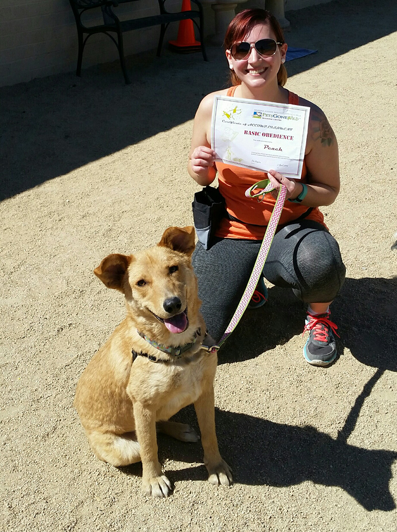 arizona-dog-training-class-basic-obedience.jpg
