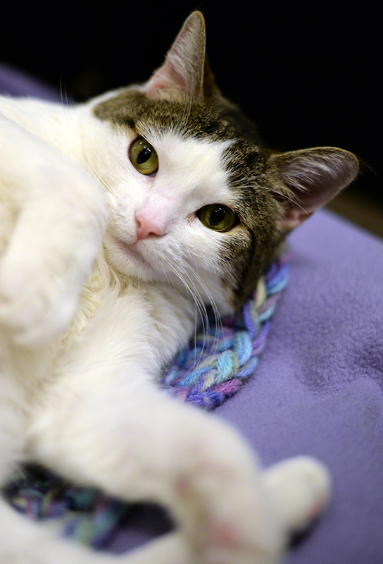 cat_emmi_face_2.jpg The following steps outline how the adoption ...