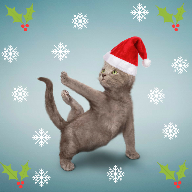 Holiday Kitten Yoga! | Arizona Animal Welfare League
