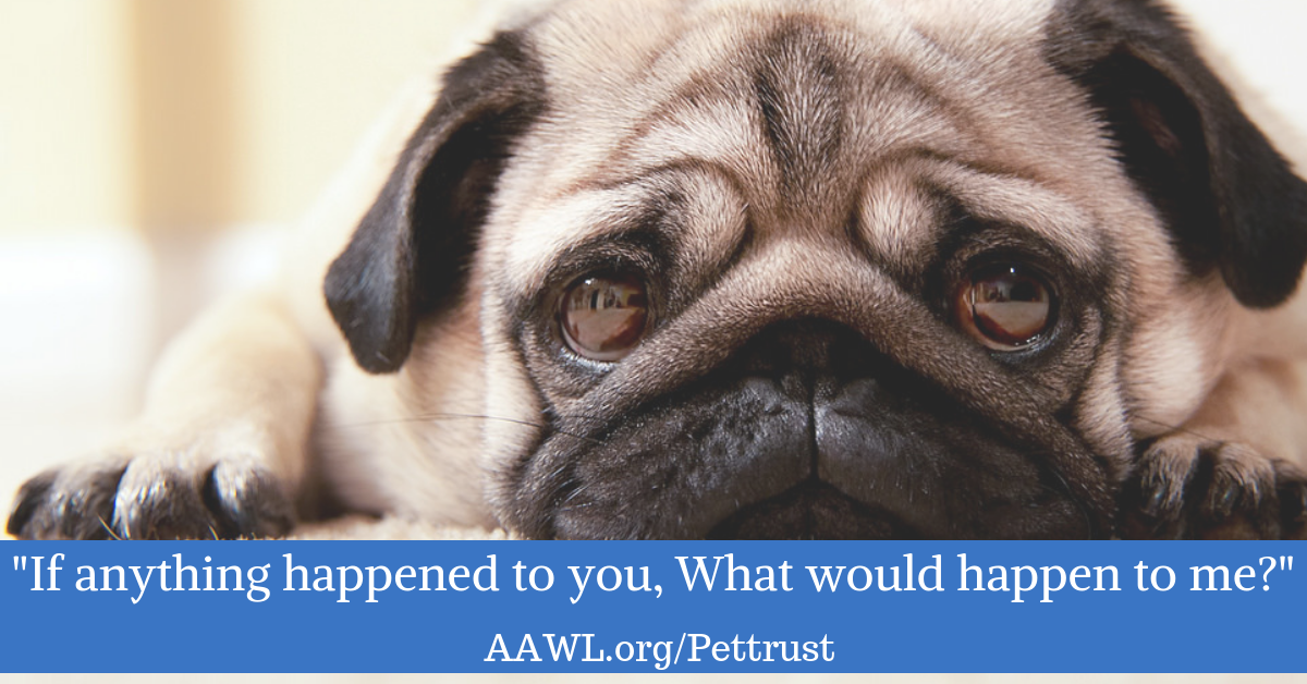 Estate Planning And Pets Arizona Animal Welfare League
