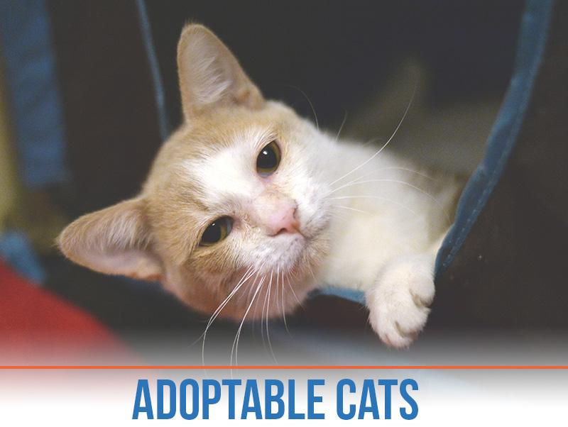 Arizona Animal Welfare League |