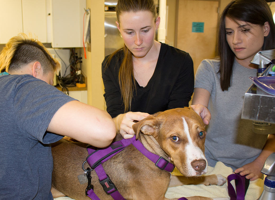 Veterinary Services | Arizona Animal Welfare League